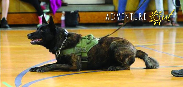 Law Enforcements's Best Friend